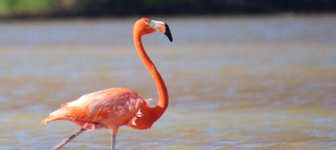 Mexique – Yucatan – Jour 8 – La réserve de Célestun
