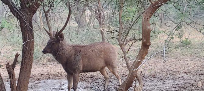 Inde – Ranthambore – Le parc national